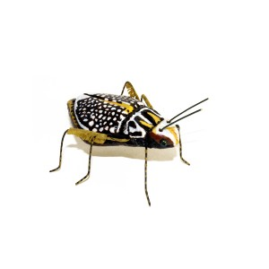 Andrea Uravitch, Beetle