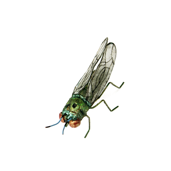 Andrea Uravitch, Housefly