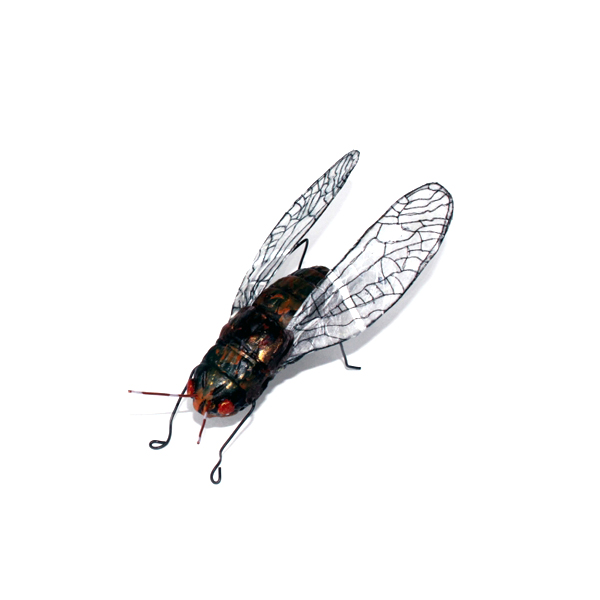 Andrea Uravitch, Insect